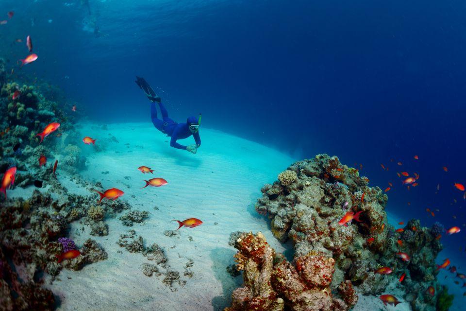 Les côtes, taba, egypte, afrique, mer rouge, plongée, plongeur, mer, sport, Snorkeling