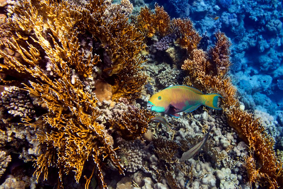 An example of Alexandrian grouper, Underwater fauna, The fauna and flora, Cape Verde