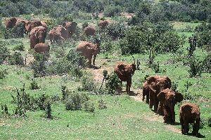 El Parque Nacional de Addo Elephant , El Parque de Addo Elephant , Sudáfrica