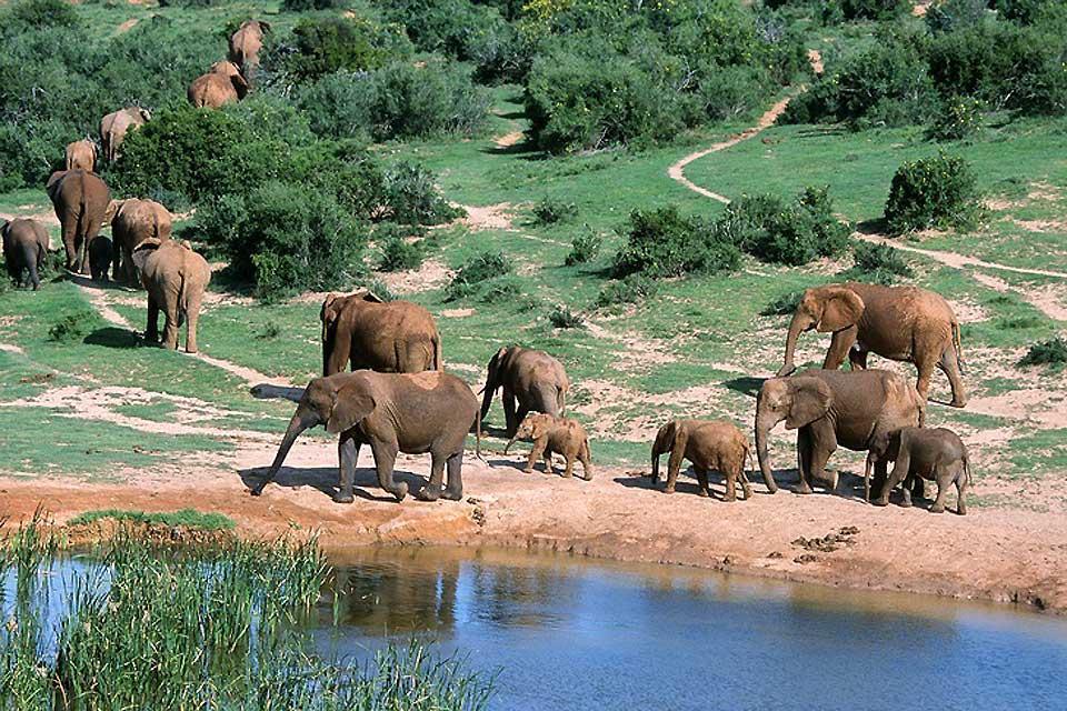 Le Parc national d'Addo Elephant , Addo Elephant , climat du parc , Afrique du Sud