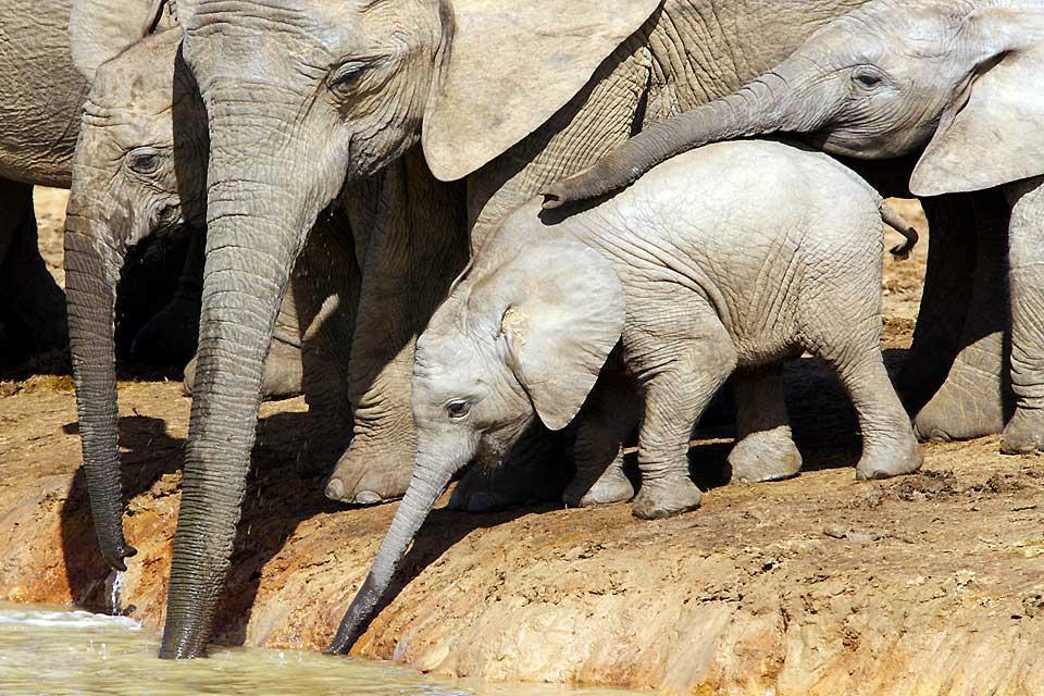 Le Parc national d'Addo Elephant , Les armes au Parc d'Addo Elephant , Afrique du Sud
