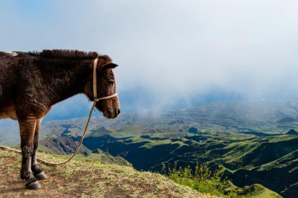 Ein Kind mit seinem Esel, Die Tierwelt, Die Fauna und Flora, Kapverden