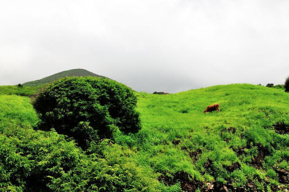 , Terrestrial wildlife, The fauna and flora, Cape Verde