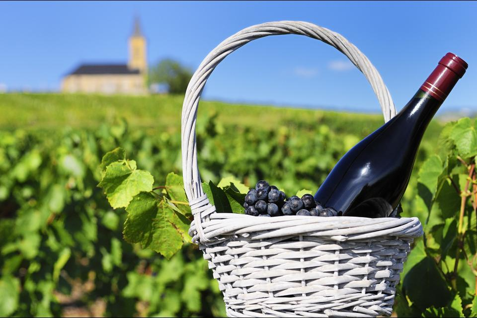 Les vins de Bourgogne , France