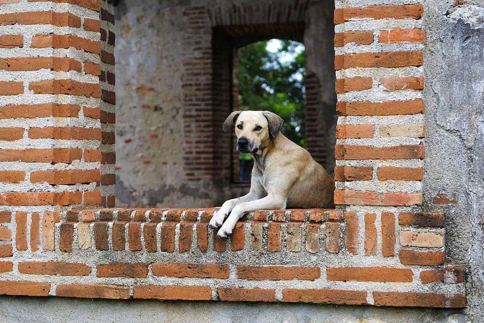 l'ancienne sucrerie de Boca de Nigua , L'ancienne sucrerie de Boca de Nigua , République dominicaine