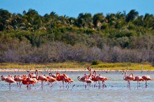 La lagune d'Oviedo , La laguna de Oviedo , República Dominicana