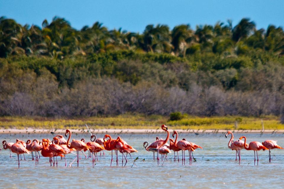 La lagune d'Oviedo , La laguna di Oviedo , Repubblica Dominicana