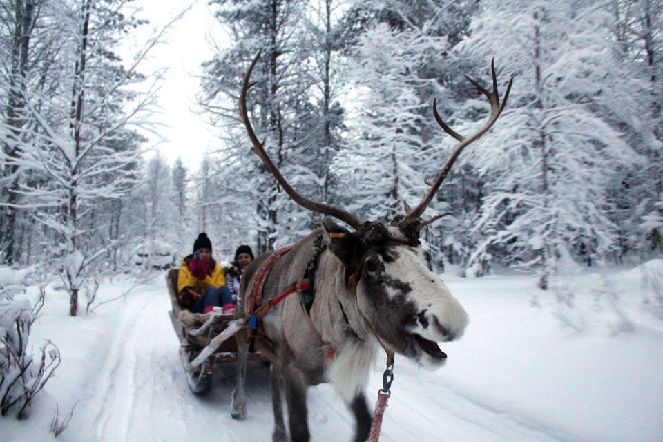Fermes de rennes , Finland