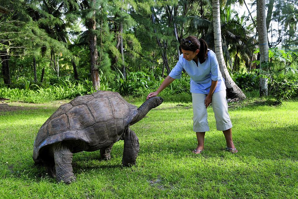 Desroches Island , Tartaruga di terra gigante , Seychelles