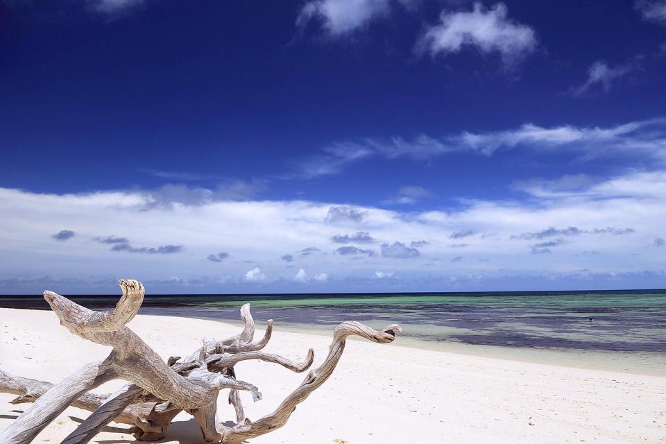 Desroches Island , Alberi tipici della Vandea sulla spiaggia , Seychelles