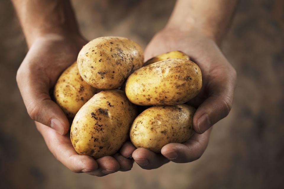 Le pâté de pommes de terre , France