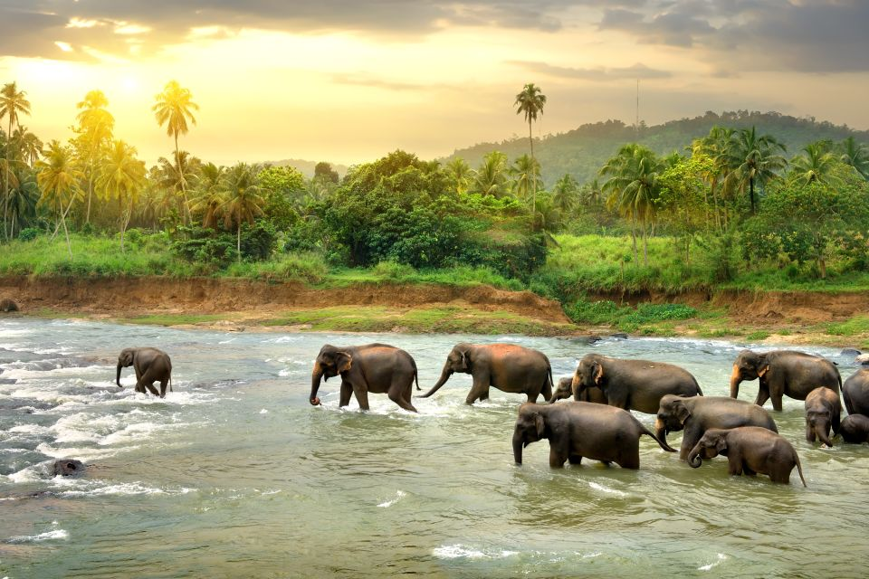 , The fauna, The fauna and flora, Central African Republic