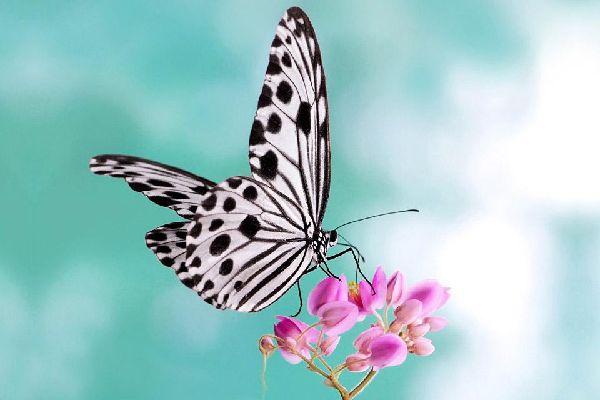 Les insectes , Malaysia