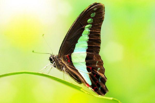 Les insectes , Malasia
