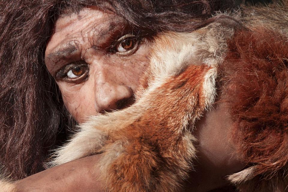 Musée de l'homme de Néandertal , France