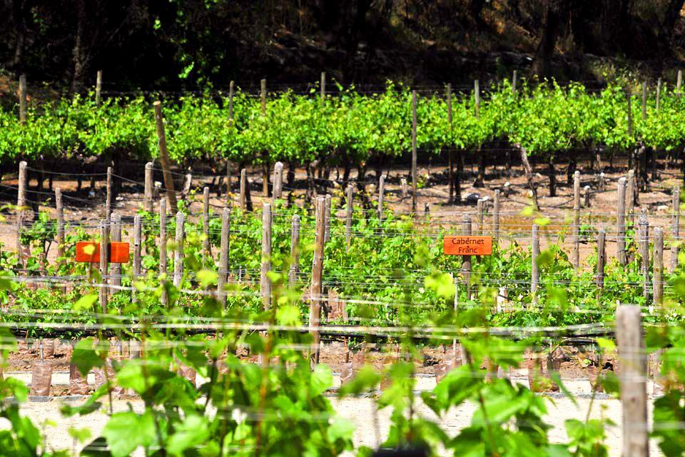 Les vignobles chiliens , Colchagua Valley , Chile
