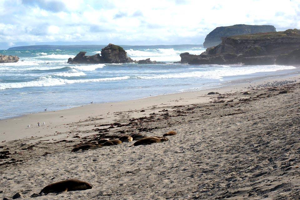 Les lions de mer , Rendez-vous avec les lions de mer , Australie