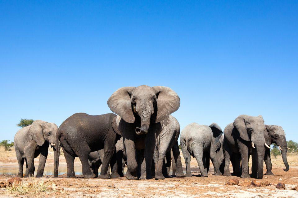 """Résultat de recherche d'images pour """"Parc national de La Gounda centrafrique"""""""