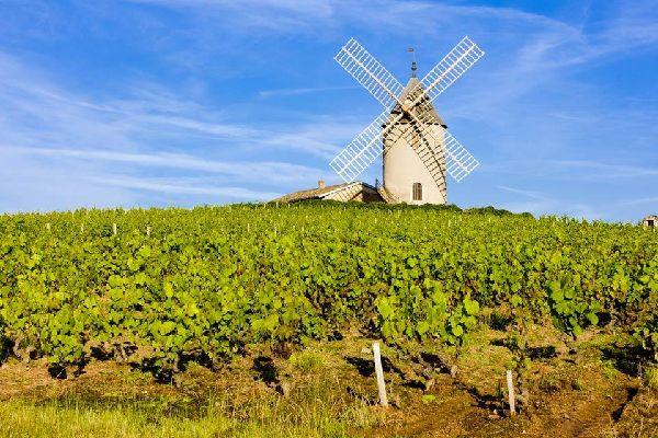 Les vignobles du Mâconnais , Moulin à vent , France