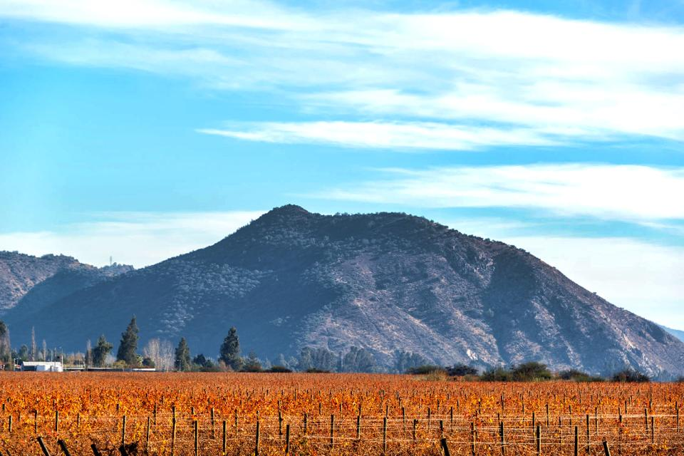 The vineyards , Chile