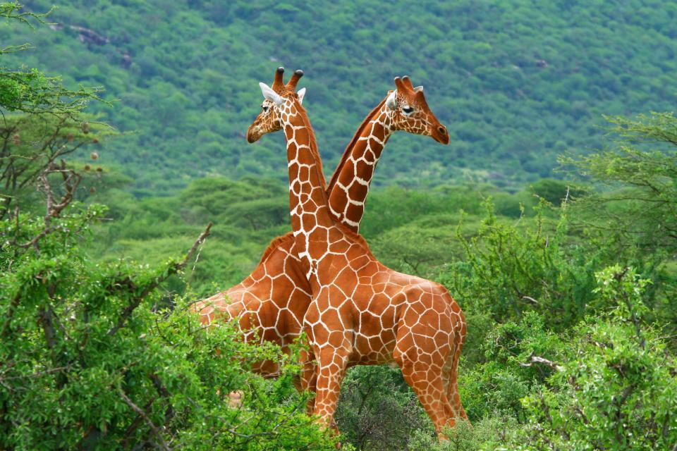 Le parc Tri-National de la Sangha , Cameroun