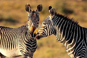 La Reserva Natural del Cabo de Buena Esperanza , El cabo de Buena Esperanza , Sudáfrica