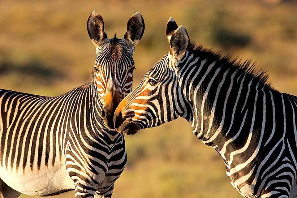 La riserva del Capo di Buona Speranza , Il Capo di Buona Speranza , Sudafrica