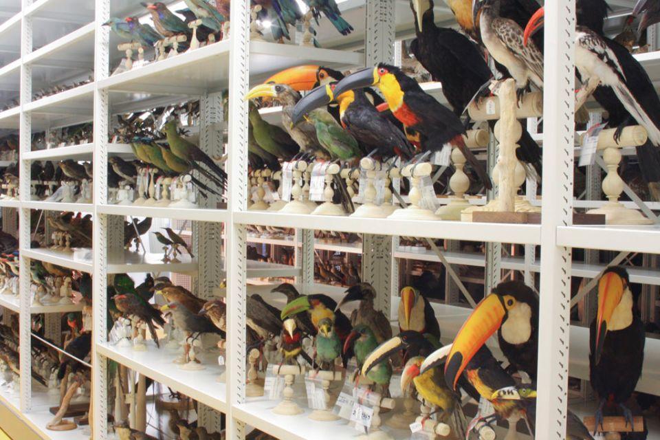 Le Muséum d'Histoires Naturelles de Bordeaux, Arte y cultura, Aquitania