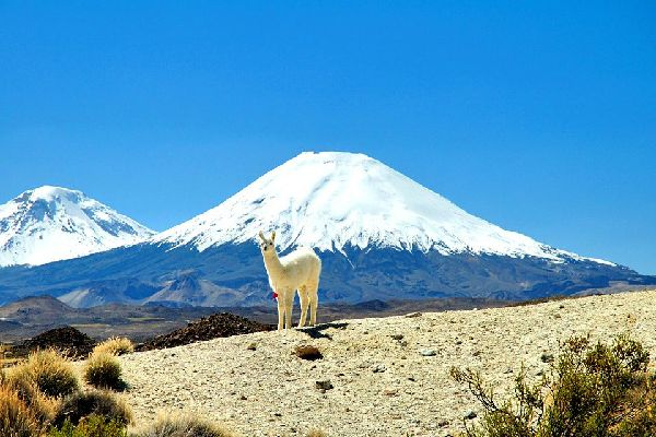 Der Lauca-Nationalpark , Chile