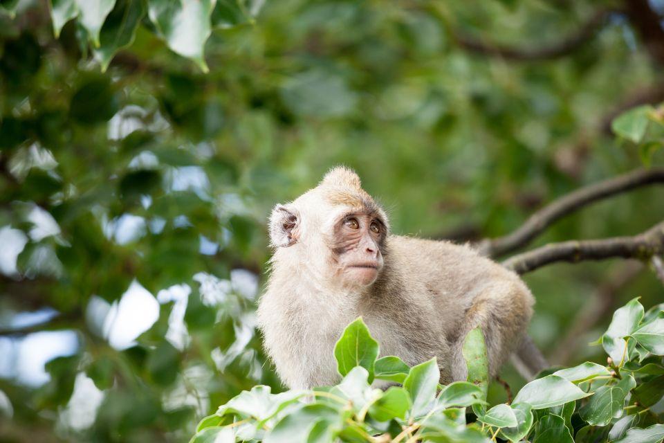 Los animales del parque, La réserve de Bras d'Eau, Los parques y las reservas naturales, Isla Mauricio