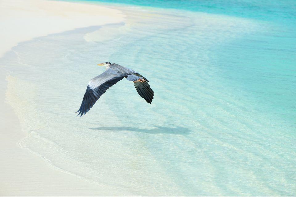 Las aves de Bras d'Eau, La réserve de Bras d'Eau, Los parques y las reservas naturales, Isla Mauricio