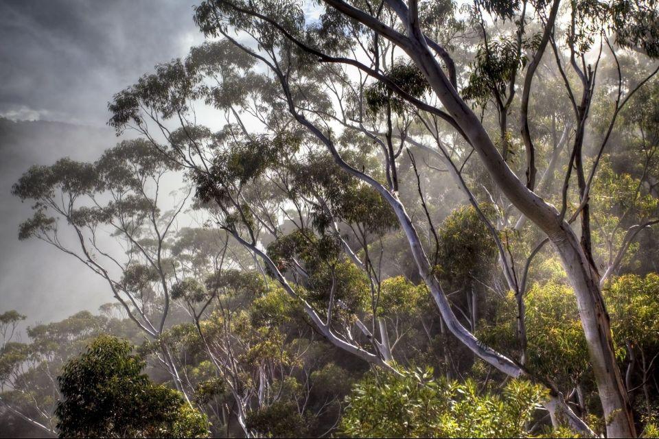 Los árboles del parque, La réserve de Bras d'Eau, Los parques y las reservas naturales, Isla Mauricio
