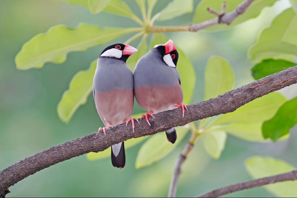 La fauna del parque, La réserve de Bras d'Eau, Los parques y las reservas naturales, Isla Mauricio