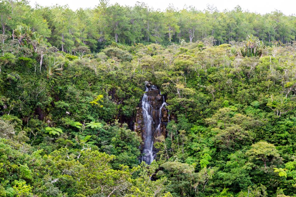 La vegetazione del parco, Le Parc National des Gorges de la Rivière Noire, I parchi e le riserve, Isola Mauritius
