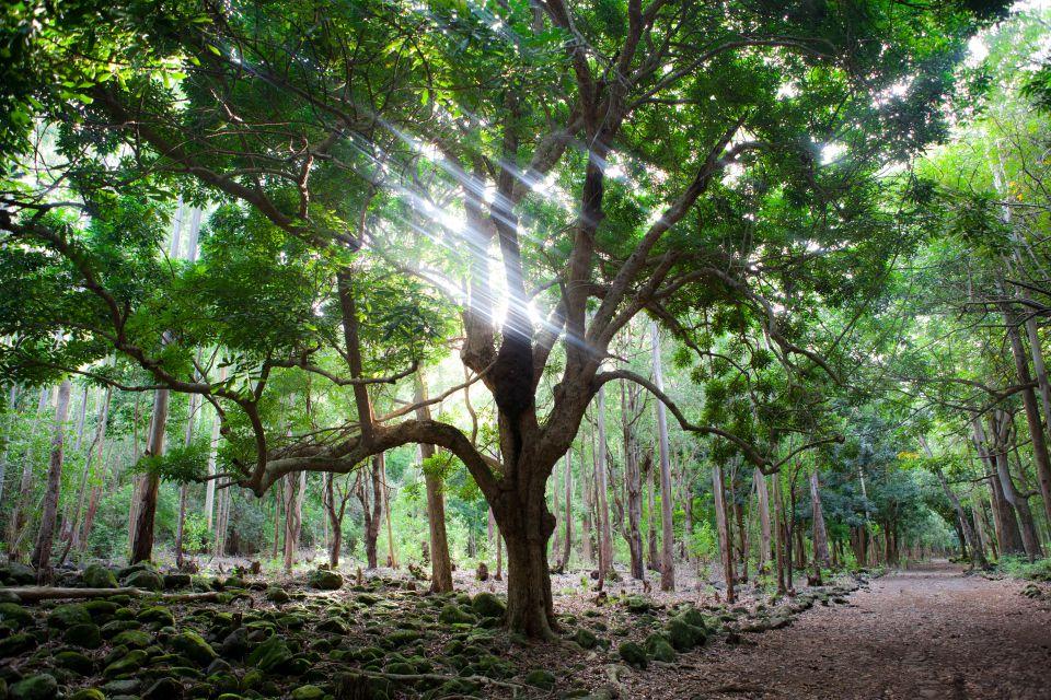 La flora del parco, Le Parc National des Gorges de la Rivière Noire, I parchi e le riserve, Isola Mauritius