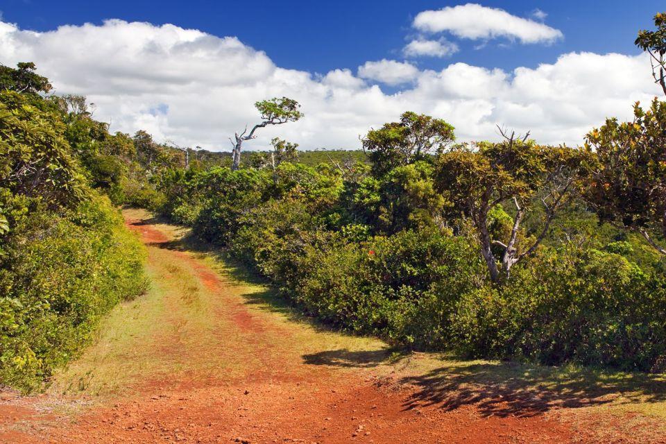 La fauna del parco, Le Parc National des Gorges de la Rivière Noire, I parchi e le riserve, Isola Mauritius