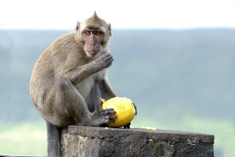 Les parcs et les réserves, Casela, casela world of Adventures, maurice, île, ile, faune, zoo, animal, primate, singe, macaque