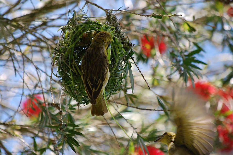 Les parcs et les réserves, Casela, casela world of Adventures, maurice, île, ile, faune, zoo, animal, oiseau, nid, nidification