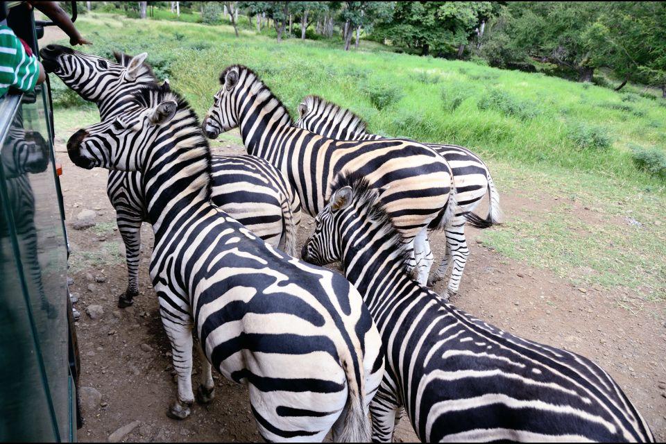 Les parcs et les réserves, Casela, casela world of Adventures, maurice, île, ile, faune, zoo, animal, zèbre, équidé