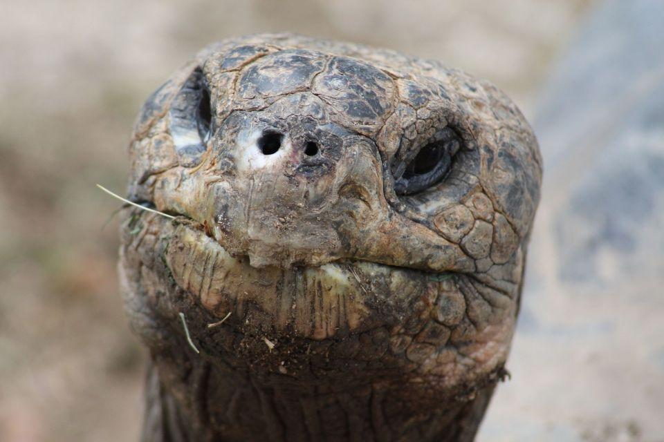 Giant tortoises, Casela Nature & Leisure Park, Parks and reserves, Mauritius