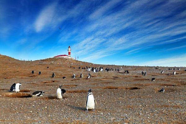 "Il Parco nazionale di Los Pingüinos , ""Los Pinguinos"" devono arrivare , Cile"