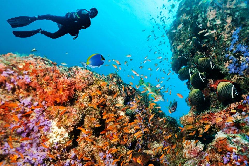 Les côtes, afrique, ile maurice, ocean indien, maurice, plongée, sport, sous-marin, faune, poisson