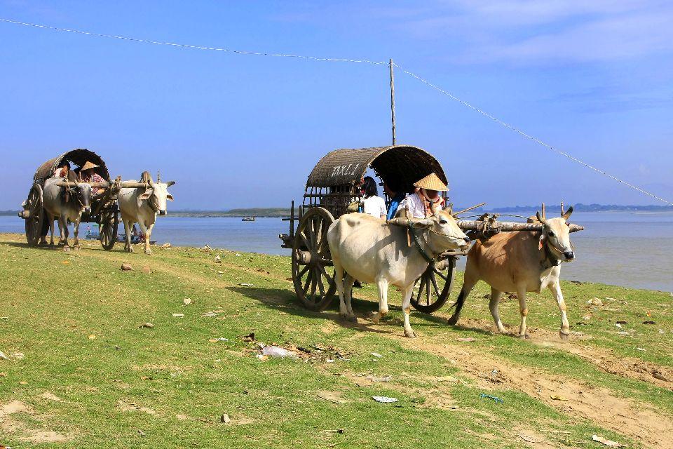 Mingun , Char à bœufs à Mingun , Birmanie
