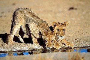 El Parque Nacional de Kalahari Gemsbok , El Parque Kalahari Gemsbok , Sudáfrica
