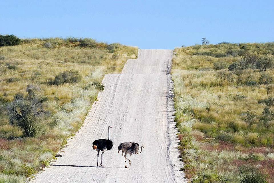Le Parc national Kalahari Gemsbok , Kalahari Gemsbok , un vaste territoire , Afrique du Sud
