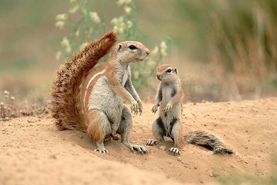 Le Parc national Kalahari Gemsbok , Meilleur moment pour visiter Kalahari Gemsbok , Afrique du Sud