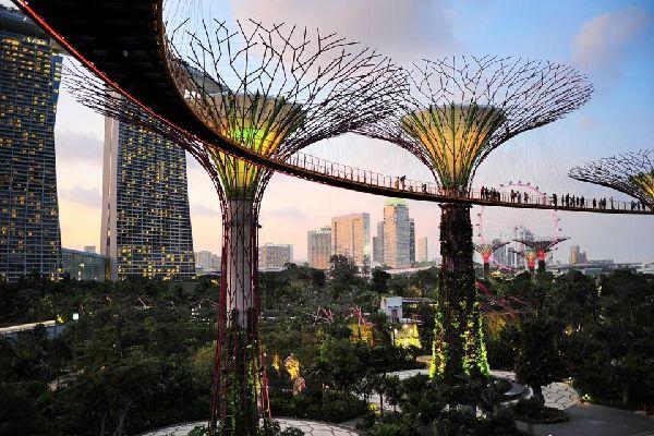 Le parc Gardens by the Bay , Les Supertree Grove , Singapour