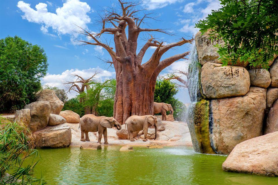 Un elefante si bagna sotto la cascata, Il Bioparco, La fauna e la flora, Comunità valenzana