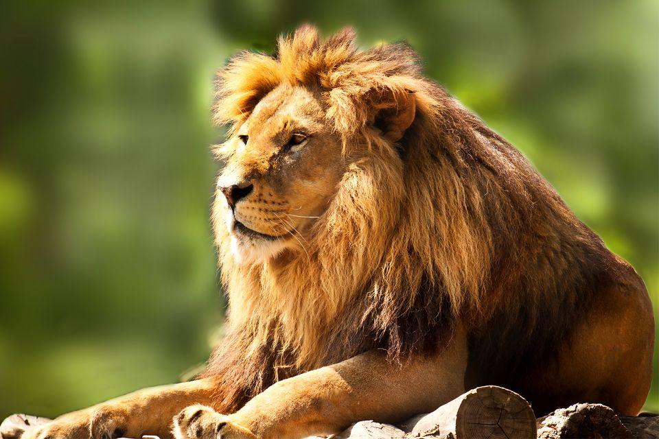 Sua maestà il leone, re degli animali, Il Bioparco, La fauna e la flora, Comunità valenzana