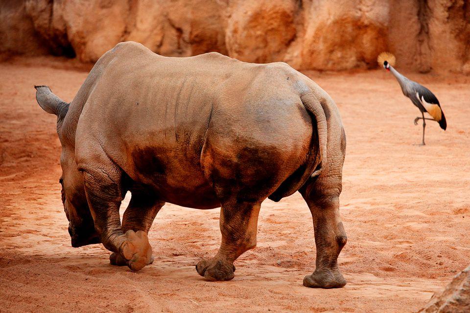 Il rinoceronte Romulo, Il Bioparco, La fauna e la flora, Comunità valenzana